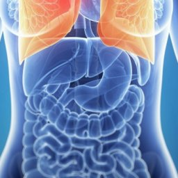 ep_19040628_-_3d_rendered_illustration_of_the_female_anatomy_-_lung_cancer_620x350
